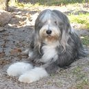 The Bearded Collie Club